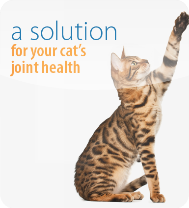 A solution for your cat's joint health