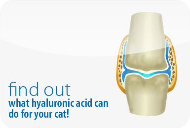 Find out what hyaluronic acid can do for your pet!
