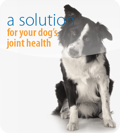 A solution for your dog's joint health