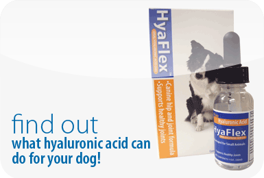 Find out what hyaluronic acid can do for your dog!
