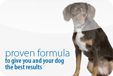 Proven formula to give you and your dog the best results